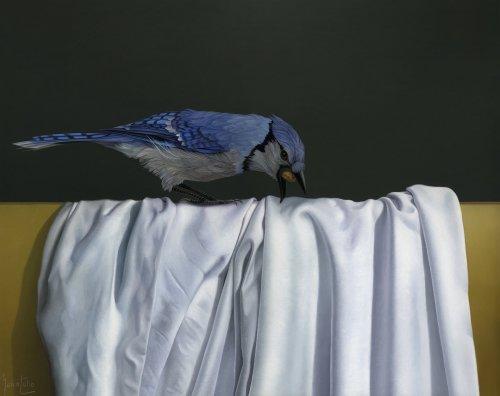 Marco-Tulio-Bluejay-Online-Art-Galleries-1920