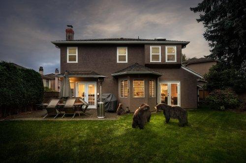 Kevin-Lanthier-Backyard-Bears-Online-Art-Galleries