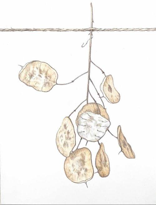 Jane-Wolsak-Silve-rDollar-2019-Graphite-And-Coloured-Pencil-On-Paper-On-Panel-8x6-300-Online-Art-Galleries