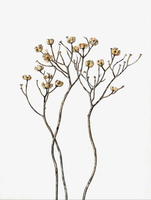 Jane-Wolsak-Weeds-Cups-2019-Graphite-And-Acrylic-On-Paper-On-Panel-8x6-250-Online-Art-Galleries