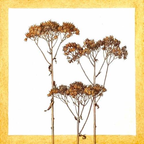 Jane-Wolsak-Weeds-Orange-2019-Graphite-And-Acrylic-On-Paper-On-Panel-6x6-250-Online-Art-Galleries