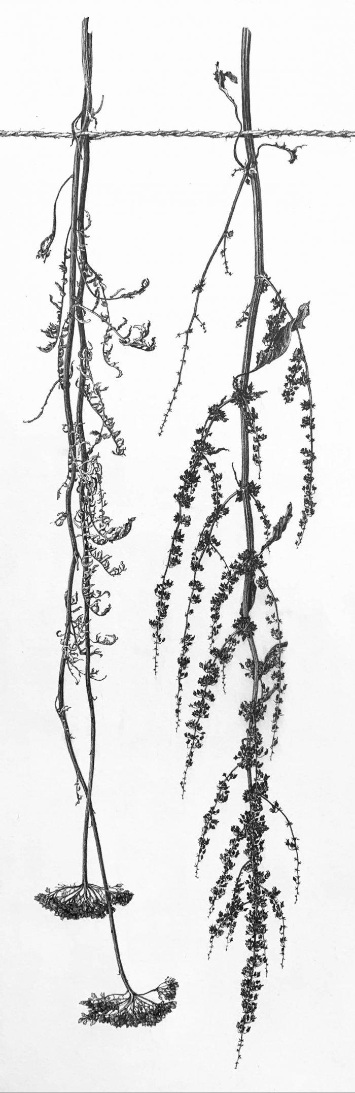 Jane-Wolsak-Yarrow-And-Dock-2019-Graphite-On-Gessoed-Panel-24x8-550-Online-Art-Galleries