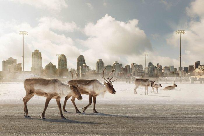 Kevin-Lanthier-Caribou-Migrants-Online-Art-Galleries