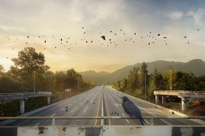 Kevin-Lanthier-Crow-Commutes-Online-Art-Galleries